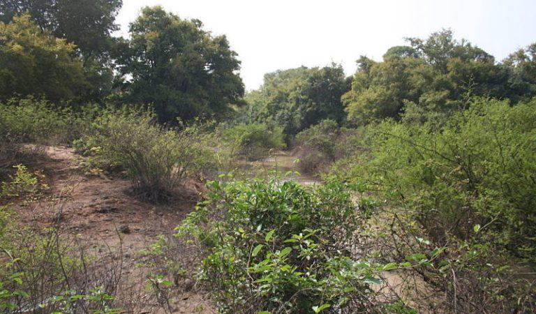 Dans le contexte d'un pays sahélien comme le Burkina, que pensez-vous d'une éventuelle destruction de la forêt de Kua (16ha) pour construire un hôpital ?